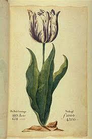 Tulip Mania Chart Tulip Mania Wikipedia