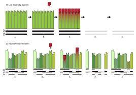 Species Diversity Definition Plant Species Diversity Creates Long Term Stability Asknature