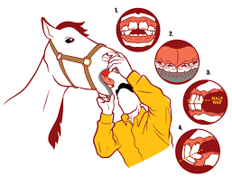 How To Age A Horse By Its Teeth American Cowboy Western