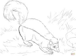 Small Picture American Hog Nosed Skunk coloring page Free Printable Coloring Pages