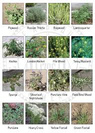 Chart Of Nuisance Weeds