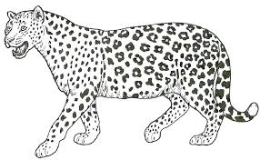 Jungle Coloring Pages Printable Snow Leopard Sitting In Page Games