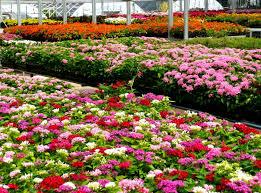 gardening tips articles