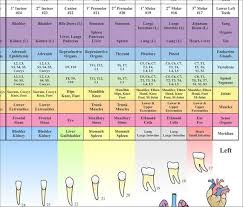 Acupuncture Meridian Relationships Between Teeth And Body