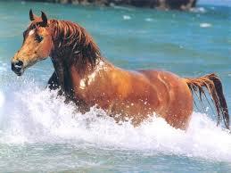 Jeito de casa quartos infantis. Quarto De Milha O Cavalo Mais Lindo Do Mundo Home Facebook
