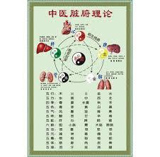 Usd 7 29 Chinese Medicine Viscera Theory Wall Stickers