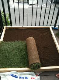 roll the 2 strips of sod down you will have a little extra that you will need to cut off