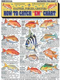 Grouper Species Chart Saltwater Fishing Charts And Saltwater Fish Identification