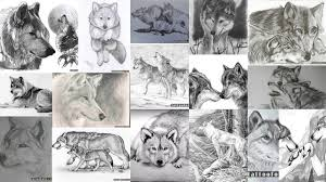 значение тату волчица клуб татуировки фото тату значения эскизы