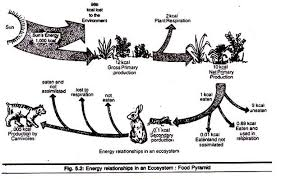 essay on ecosystem meaning and components energy relationship in an ecosystem