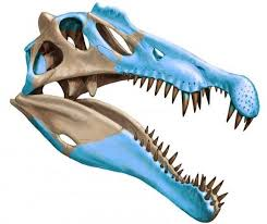 El mayor dinosaurio carnívoro vivía en el agua y cazaba tiburones -  Libertad Digital