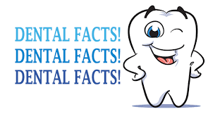 Image result for facts about teeth