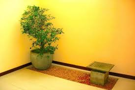 Small Picture House of Green Indoor Plants russel 1 6 Garden Designing Company