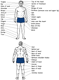 Pressure Point Chart Martial Arts Karate Stances Strikes And Vital Points