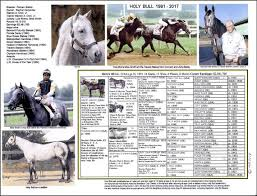 Horse Pedigree Chart Race Horse Holy Bull Picture Pedigree Chart
