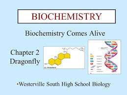 biochemistry comes alive chapter dragonfly biochemistry  1 biochemistry comes alive chapter 2 dragonfly biochemistry westerville south high school biology