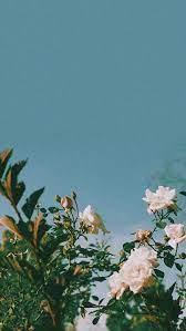 Plants Aesthetic Wallpapers - Wallpaper ...