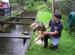 easy outdoor turtle pond designs
