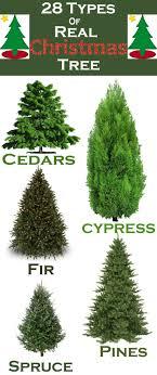 Castro Valley Christmas Tree Farm  Tree TypesTypes Of Fir Christmas Trees