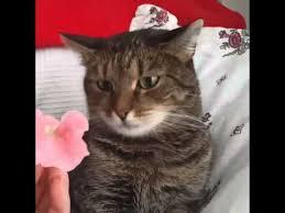 flowers cat