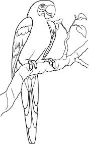 Small Picture Lovely Parrot Coloring Page Download Print Online Coloring