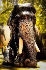 Elephant Images Kerala Hd