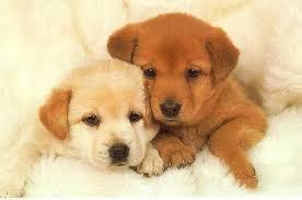 cute baby puppies sleeping. Wonderful Puppies Baby Puppy Sleeping In Cute Puppies S