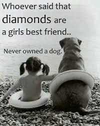 Quotes About Dogs Inspiration Loving Quotes About Dogs TheBERRY Dog Humour Pinterest Dog