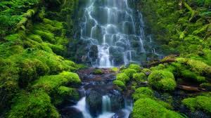 wallpaper landscape waterfall moss jungle stream rainforest nature reserve tree watercourse vegetation creek chute werfall