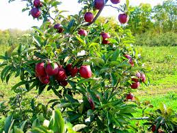 Buy North Carolina Trees  NC Shade Tree Sale  Best North Fruit Trees That Grow In Nc