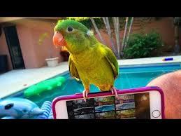 Funny <b>Birds Imitating</b> Electronic Sounds - <b>Parrots</b> Mimic Alarm ...
