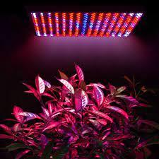 Đèn Led dành cho cây trồng quang hợp - ELLEN
