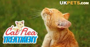 Cat Flea Treatment Reviews Uk Pets