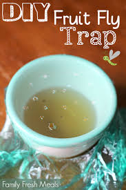 easy diy fruit fly trap family fresh meals