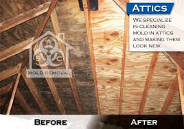 mold removal pittsburgh. Brilliant Mold With Mold Removal Pittsburgh L
