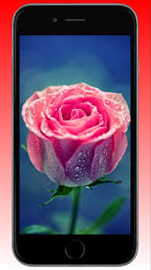 Lovely Rose Wallpaper HD for Android ...