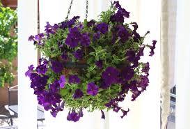 diy hanging flower spheres