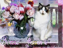"""Résultat de recherche d'images pour """"gif bonne journée fleurs"""""""