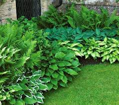 Small Picture Best 25 Shaded garden ideas only on Pinterest Shade plants