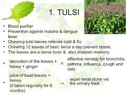 essay on medicinal plants essay on medicinal plants gxart photo essay on medicinal plant tulsi leaf essay for youessay on medicinal plant tulsi leaf