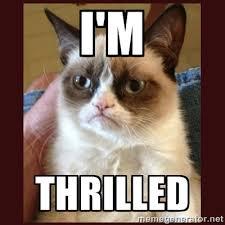 I'm Thrilled - Tard the Grumpy Cat | Meme Generator via Relatably.com