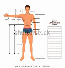 Muscle Chart Template Classy Male Body Measurement Chart Scheme Measurement Stock Vector Royalty