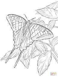 Butterfly Coloring Pages | ngbasic.com