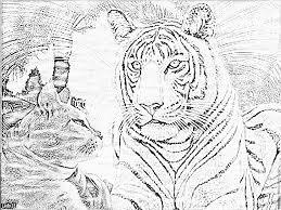 Dessin Magique Tigre