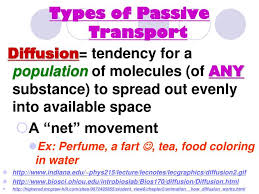 3 Types Of Passive Transport 3 Types Of Passive Transport Tutar Opencertificates Co