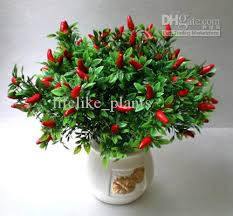 Decorative Lucky Plants For Home And Sale  Buy Lucky Plants For Decorative Plants For Home