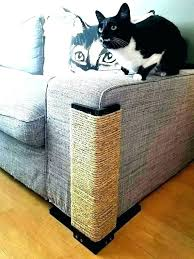 how to fix scratches on leather couch repairing scratches on leather couch fix scratched leather cat