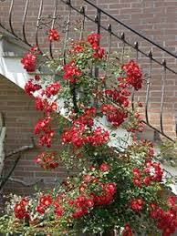 Tip Of The Day  Hedera Helix Creepers And HydrangeaClimbing Plant