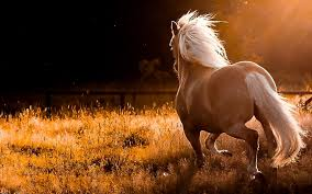 wild horses running wallpaper. Wild Horse Wallpapers Image Source From This And Horses Running Wallpaper