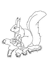 Eekhoorn Kleurplaat Kinderen Kleurplaat Eekhoorntjes 7634